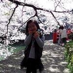 桜きれい!