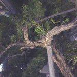 舞姫の間の中庭の松