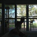 Foto de Baffle Retreat Bed and Breakfast