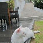 Sweet island cat