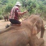brushing the elephant