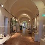Interno Museo delle Scienze