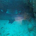 Shark's Cave