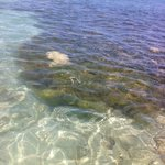 beach water-great for snorkeling