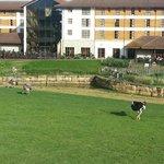 Foto de Chessington Safari Hotel