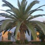 Palme in der Mitte unseres Nebenhauses