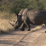 Rhino Projekt