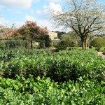 Maturing vegetables in the kitchen gardens