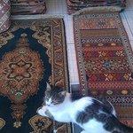 happy istanbul cat
