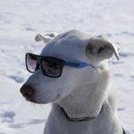 Mod was a cool dog
