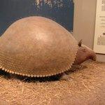 large animal