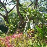 Plants in Botanic Gardens