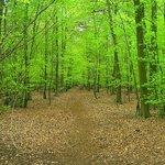 Thorpe woodlands
