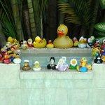 Duck Duck Ducky.......