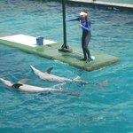 Oceanario golfinhos