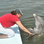 stroking the dolphin