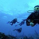 Blue Life Diving