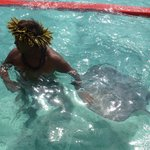 Snorkeling with Sting Rays