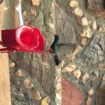 Humming bird at feeder at the hotel