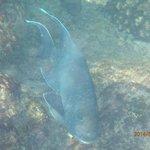 aquatic fauna