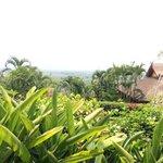 la vue du jardin