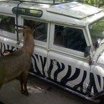 Bisa sewa Jeep utk berkeliling