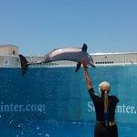 dolphin, Nicholas