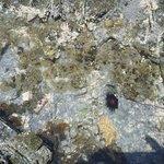Une drôle de bibitte sur la partie rocheuse de la plage