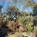 Ethel M's Cactus Garden Las Vegas