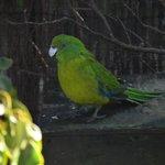 Kiwi Birdlife Park 3