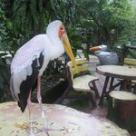 sharing your lunch with big birds