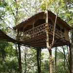 treetop cafe