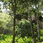 Vanya treetop accommodation in the jungle