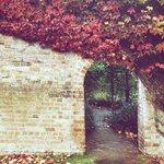 Mixed rose garden