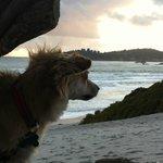 Dog Friendly Carmel Beach - several blocks from Cypress Inn