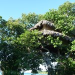 Le bungalow dans l'arbre