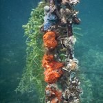 Mangrove Snorkeling