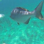 La experiencia del snorkeling en el pequeño arrecife es imperdible, pero se paga aparte.
