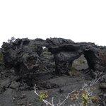 Lava trees