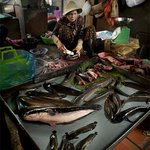 A fish monger at The Russian Market, Phnom Penh.