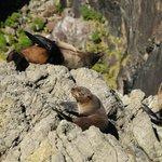 Seals on Milford Sound.