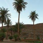 Foto de Auberge Camping Oasis El Mharech