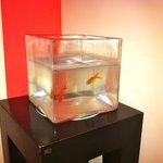 pesciolini rossi al quarto piano