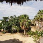 Foto de Las Palmas Tropicales