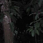 Egret Nesting
