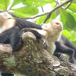 Monkeys in the Cahuita National Park
