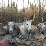 Our breakfast guest - Donkey sanctuary next to our casita