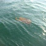Você não ia querer nadar perto disso! (2)