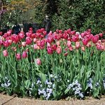 One of many flower beds