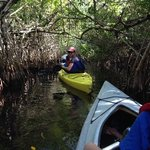 A Mangrove tunnel joining from one estuary to another